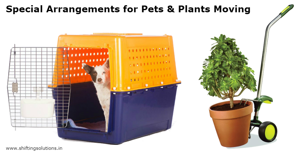 pets-n-plants-moving